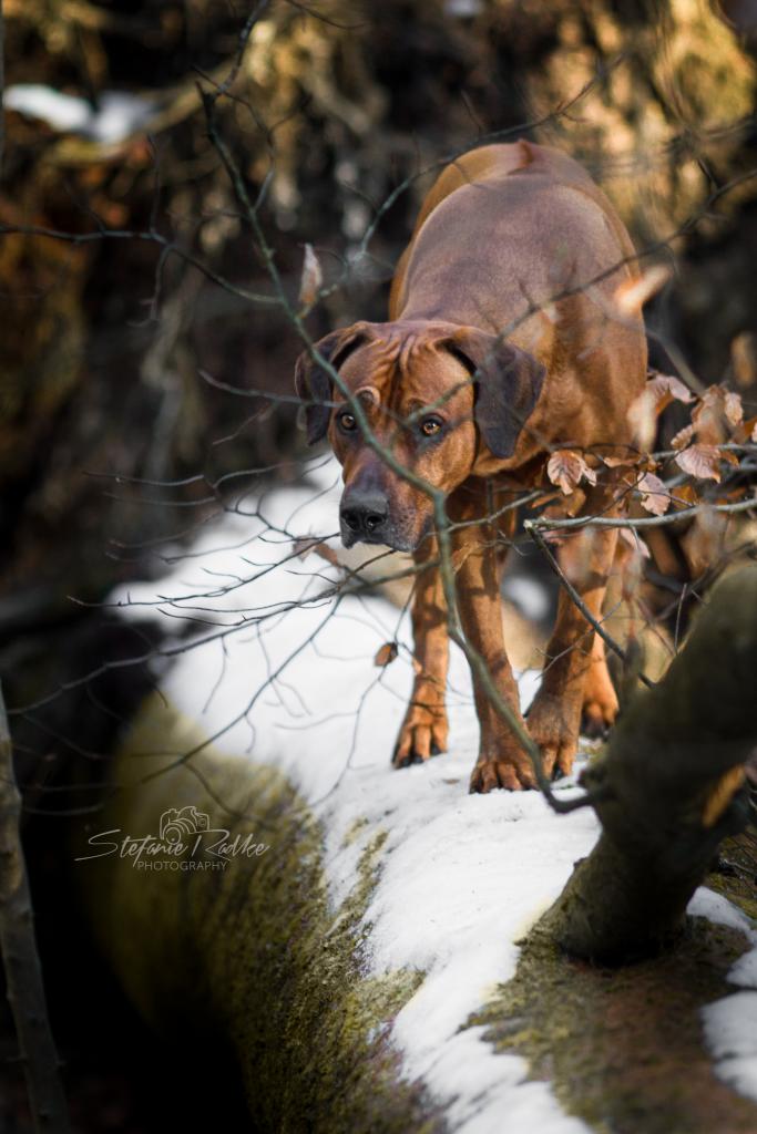 Bambi-Wald-43