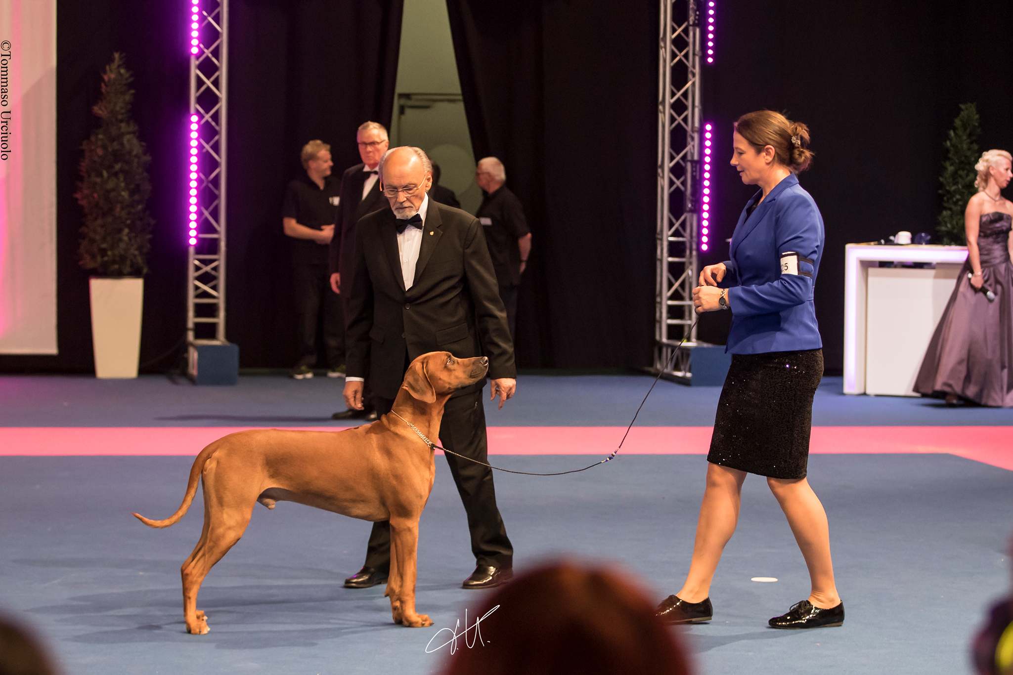 Junior World Winner Ndoki Highlander Rhodesian Ridgeback